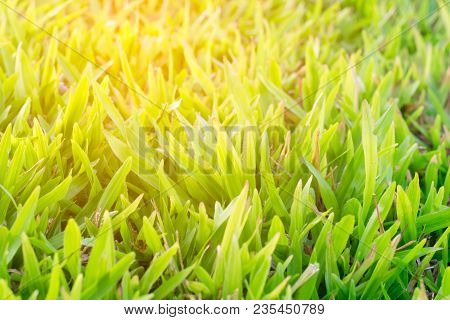 The Sunshine On Green Grass Background Texture