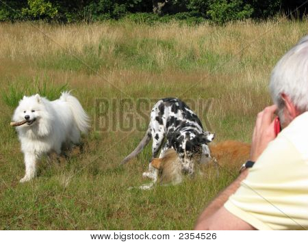 Man taking photos of three dogs playing together poster