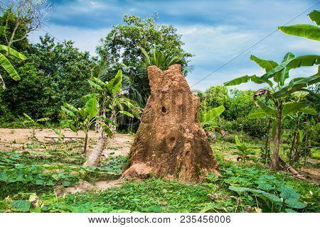 Giant soil termitary termites nest in Jungle of Sri Lanka.