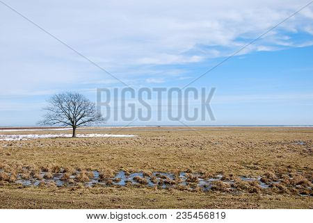 Lone Tree In A Great Grassland At Ottenby On The Swedish Island Oland By Early Springtime