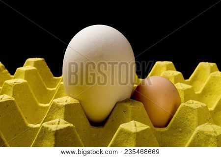 Giant Size Goose Egg Next To A Chicken Egg On Package Concept Of Size Comparison