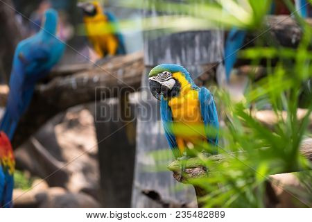 Colorful Blue Macaw Parrot Bird Sitting On Branch Twig With Natural Background And Copy Space For Te