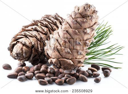 Pine nut cones and pine nuts on the white background. Organic food.