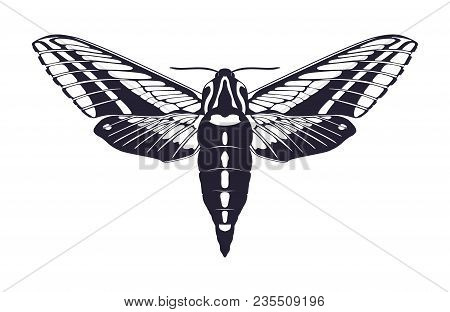 Vector Picture Of Non-continuous Silhouette Of Butterfly In A Flat Style On A White Background.