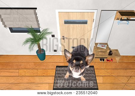 Cute Dog Chihuahua Sit On Welcome Doormat Welcome