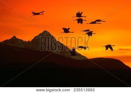 Sandhill Cranes Flying Into Sunset Over Mountain Range.