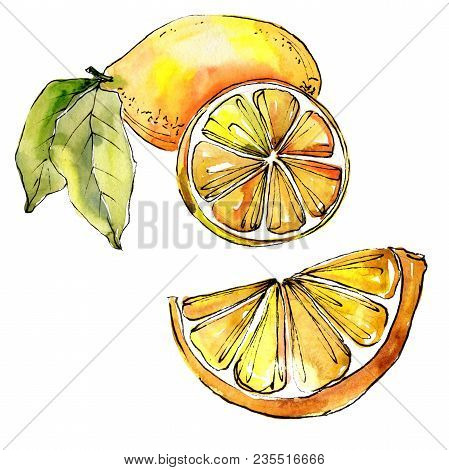 Exotic Lemon Citruses In A Watercolor Style Isolated. Full Name Of The Citruses: Lemon. Aquarelle Ci