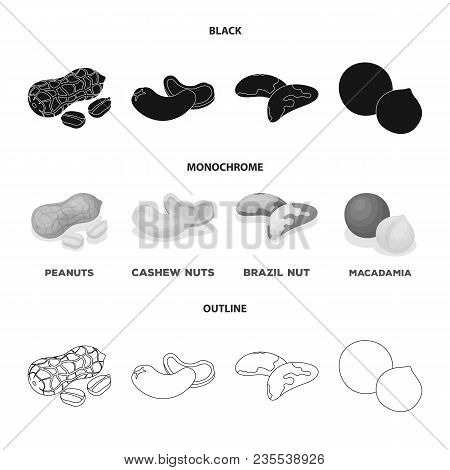 Peanuts, Cashews, Brazil Nuts, Macadamia.different Kinds Of Nuts Set Collection Icons In Black, Mono