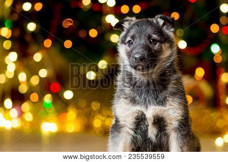 A Small Pedigreed Puppy Near A Christmas Tree With Garlands