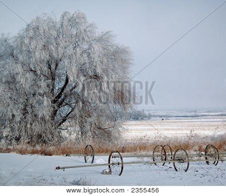 Frozen Farmland
