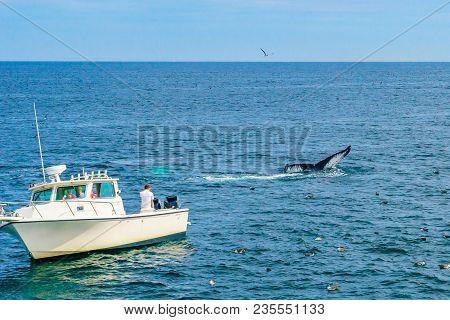 Boat And Whale, Cape Cod, Massachusetts Us