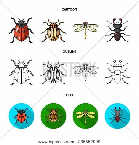 Insect, Bug, Beetle, Paw .insects Set Collection Icons In Cartoon, Outline, Flat Style Vector Symbol