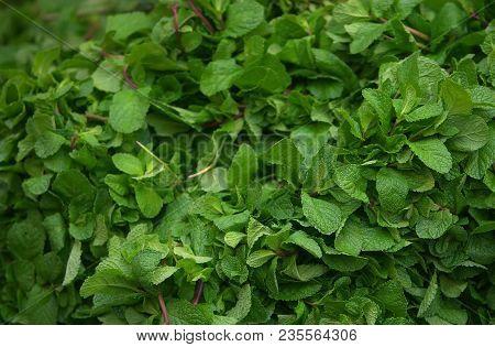 Mint Leaves.mint Leaves.mint Leaves Background.peppermint.leaves Of Mint On Green Background.closeup