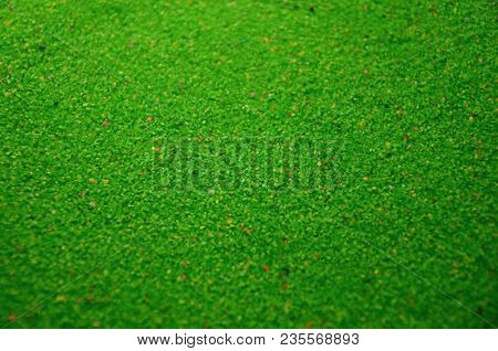 Texture Of A Colored Granular Sand Close Up. Green Grains