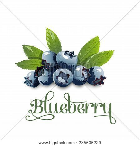 Blueberry, Leaves And Berries Isolated On White Background. Realistic Digital Paint. Vector Illustra