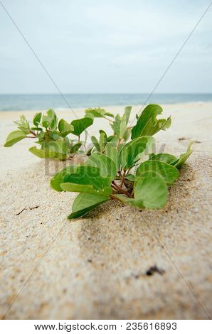 Surfave Level Shoot, Beach Morning Glory Or