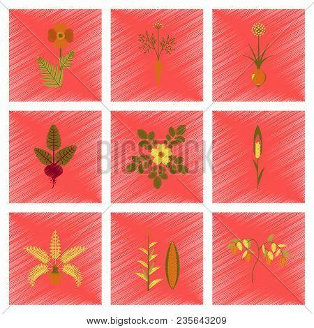 Assembly Flat Shading Style Illustration Of Papaver Daucus Carota Allium Beta Rosa Majalis Phoenix Z