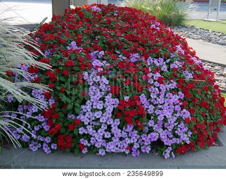 Landscaped Walkway With Small Blooming Red And Purple Flowers And Bushes In A Park