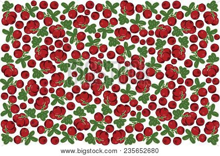 Vector Illustration Of Cowberry And Leaf Design Background White And Berry Eps10