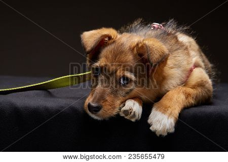 Portrait Of A Sad Puppy On A Studio Dark Background, Selective Focus, Close-up, Dog Lying On The Flo