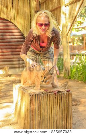 African Wildlife Experience. Blonde Caucasian Happy Woman Touching A Caracal In Oudtshoorn, Western