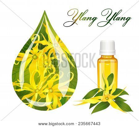 Drop Of Ylang Ylang And A Bottle On A White Background