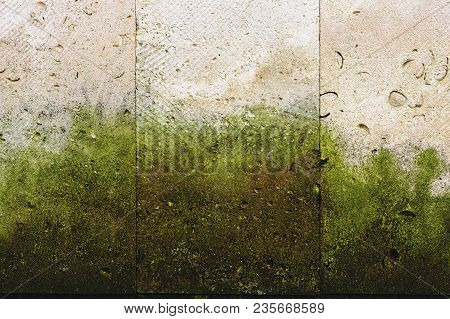 Textured Background Vertical Facing Tiles From Shell Stone With Traces Of Moss Formation In The Form