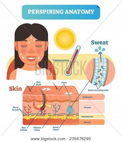 Perspiring Anatomical Human Skin Layers Cross Section Vector Illustration Diagram Poster With Sweat