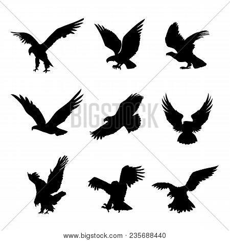 Eagle Falcon Bird Hawk Animal Silhouette Black Icon Flat Design Element Vector Illustration