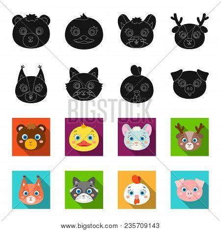 Protein, Raccoon, Chicken, Pig. Animal Muzzle Set Collection Icons In Black, Flet Style Vector Symbo