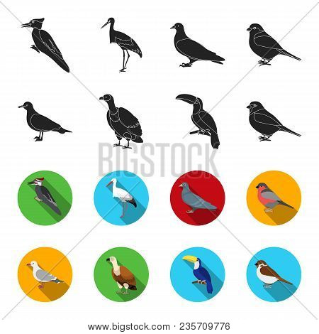 Gull, Toucan And Other Species. Birds Set Collection Icons In Black, Flet Style Vector Symbol Stock