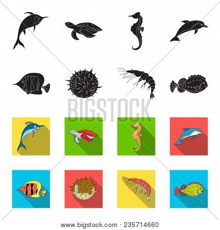 Shrimp, Fish, Hedgehog And Other Species.sea Animals Set Collection Icons In Black, Flet Style Vecto