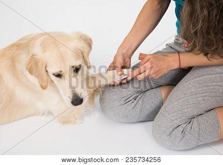 Happy Dog Golden Image Photo Free Trial Bigstock