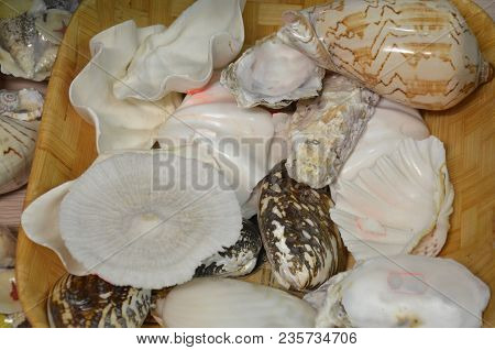 Seashells Of Different Colors. Mollusk Shells. Seashell Background. Texture Of The Shells