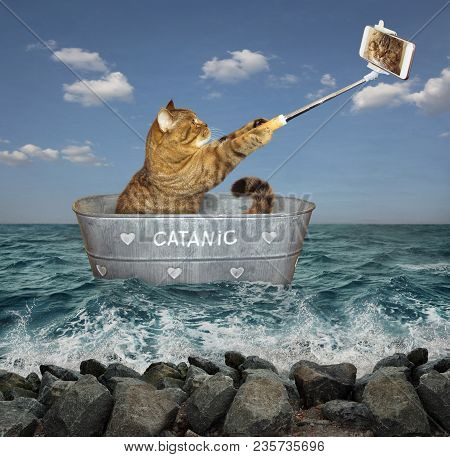 The Cat Takes Pictures Of Itself In A Wash Tub. He Floats On It In The Sea.