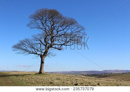 A Beautiful Lone Deciduous Tree, Against A Background Of Blue Sky And The Natural Landscape Of Open