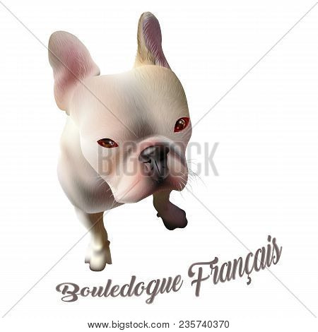 Vector Illustration Of French Bulldog. Realistic Drawing Of A Dog On White Background With Text. Pop