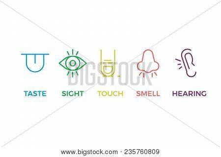 5 Human Senses Illustrations. Taste, Sight, Touch, Smell, Hearing. Tongue, Eye, Finger, Nose And Ear