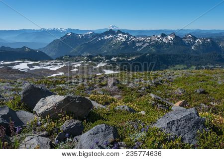 Mt Adams Looms Behind Wildflower Covered Moutains In Washington Wilderness