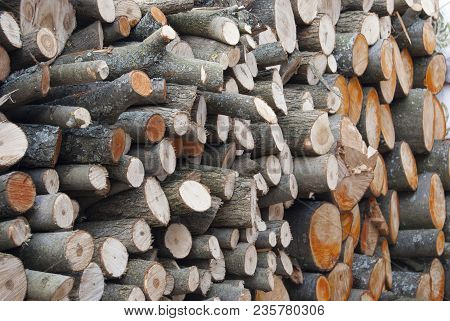 Woodpile Firewood, Piled With Circles Lies A Large Pile. Suturing Wood Fuel For The Stove