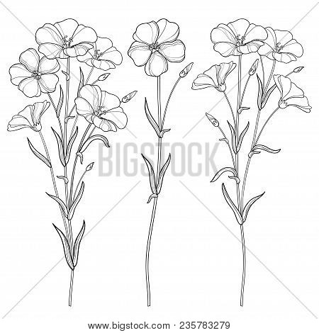 Vector Set With Outline Flax Plant Or Linseed Or Linum Flowers Bunch, Bud And Leaf In Black Isolated