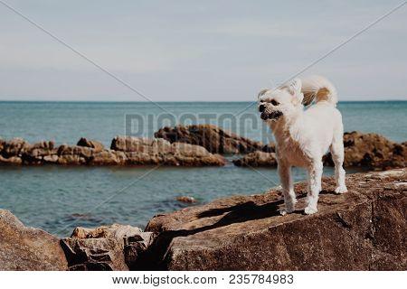 Dog Happy Fun On Rocky Beach When Travel At Sea