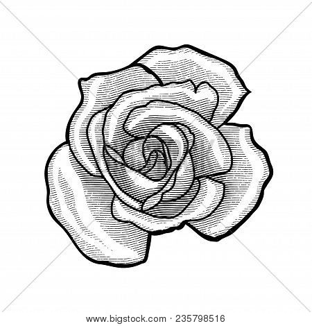 Single Rose Flower In A Vintage Retro Engraved Etching Woodcut Style