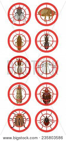 Vector Color Set With Insect Icons Of Pests Of Cockroach And Tick, Fleas And A Spider, Mosquito And