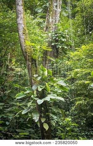 Lush Green Vines And Plants Growing On Tree In Jungle