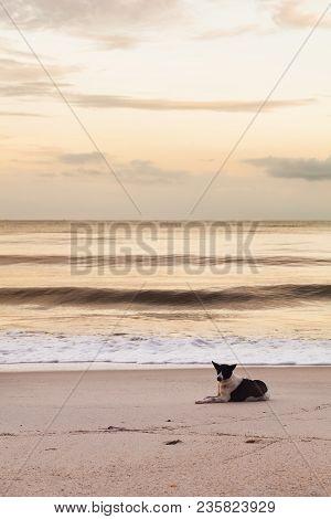 Thai Dog Sitting, Watching And Enjoying Seascape On The Sea Beach Peacefully