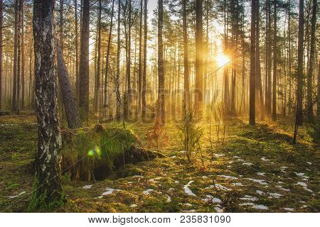 Landscape Of Spring Forest In Backlight. Morning Rays Of Sun In Frame At Dawn In Picturesque Forest.