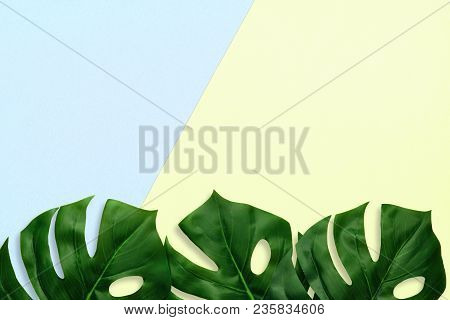 Tropical Palm Leaves On A Pastel Blue And Yellow Background. Bottom Border. Minimal Nature. Flat Lay