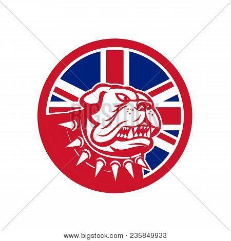 Icon Retro Style Illustration Of Head Of An English Bulldog Or British Bulldog Waering Spiked Collar