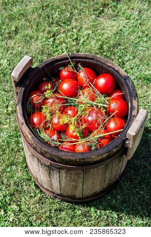 Pickled tomatoes with herbs in the wooden cask. Organic food.